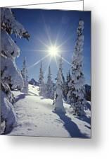 1m4882-snow Laden Tree Sunburst Greeting Card
