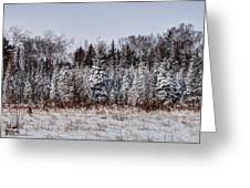 Snow Tree Line Greeting Card by Gary Gish