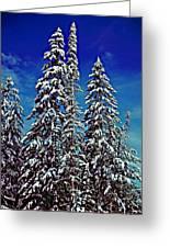 Snow Trees Greeting Card