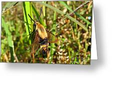 Snowberry Clearwing Greeting Card