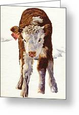 Country Life Winter Baby Calf Greeting Card