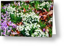 Snowdrops And Crocuses Greeting Card