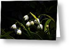 Snowdrops And Dark Background Greeting Card