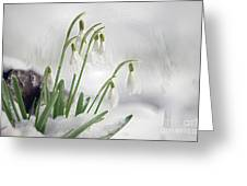 Snowdrops On Ice Greeting Card