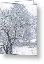 Snowfall And Apple Tree Greeting Card