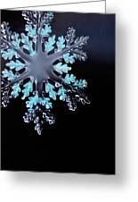 Snowflake In Window 20471 Greeting Card