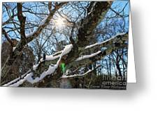 Snowglow Greeting Card