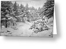 Snowing At The Forest Greeting Card