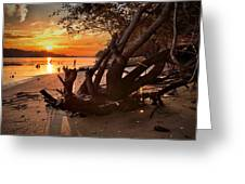 Snow's Cut Driftwood Sunset Greeting Card
