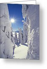 Snowscape Snow Covered Trees And Bright Sun Greeting Card