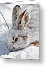 Snowshoe Hare Pictures 133 Greeting Card