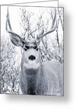Snowstorm Deer Greeting Card