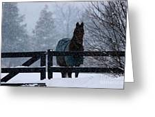 Snowstorm Horse Greeting Card