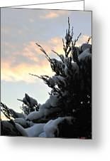 Snowvember Sunrise Greeting Card