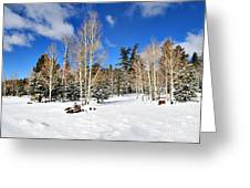 Snowy Aspen Grove Greeting Card
