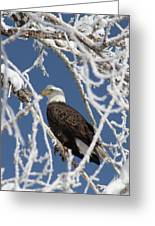 Snowy Bald Eagle Greeting Card