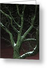 Snowy Branches Greeting Card by Guy Ricketts