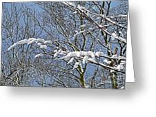 Snowy Branches With Blue Sky Greeting Card