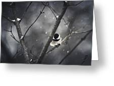 Snowy Chickadee Greeting Card by Shane Holsclaw