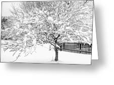 Snowy Crab Apple Greeting Card