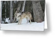 Snowy Day Trek Greeting Card