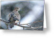 Snowy Dove Greeting Card