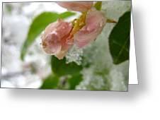 Snowy Drop Greeting Card