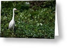 Snowy Egret 3 Greeting Card