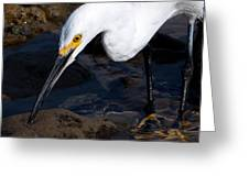 Snowy Egret Dribble Greeting Card