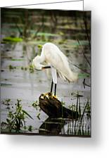 Snowy Egret In Swamp Greeting Card