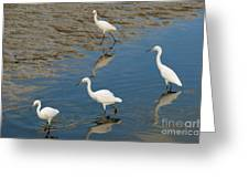 Snowy Egret Lunch Break Greeting Card