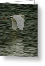 Snowy Egret On Estuary Greeting Card