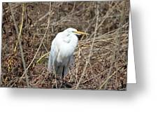 Snowy Egret On The Marsh Greeting Card