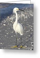 Snowy Egret Pose Greeting Card