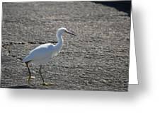 Snowy Egret Walk Greeting Card