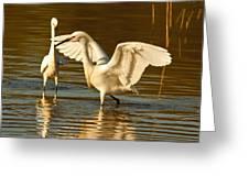 Snowy Egret Wingspan Greeting Card