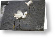 Snowy Egret With Fish No.2 Greeting Card