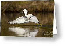 Snowy Egret With Lunch Greeting Card