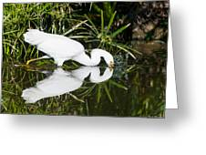 Snowy Egret With Reflection Greeting Card