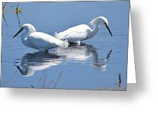 Snowy Egrets With Reflection Greeting Card