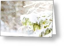 Snowy Evergreen Greeting Card