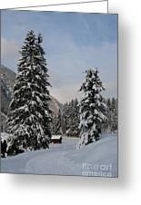 Snowy Fir Trees  Greeting Card