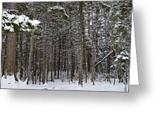 Snowy Forest In Acadia Greeting Card
