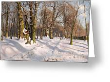 Snowy Forest Road In Sunlight Greeting Card