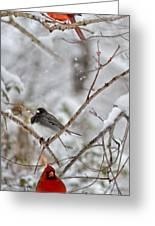 Snowy Grace Cardinals Greeting Card