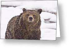 Snowy Grizzly Greeting Card