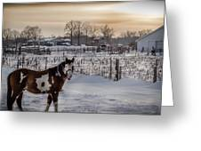 Snowy Horse Greeting Card