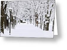 Snowy Lane In Winter Park Greeting Card