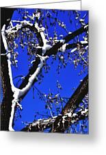 Snowy Limbs 14051 Greeting Card