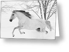 Snowy Mare Leaps Greeting Card